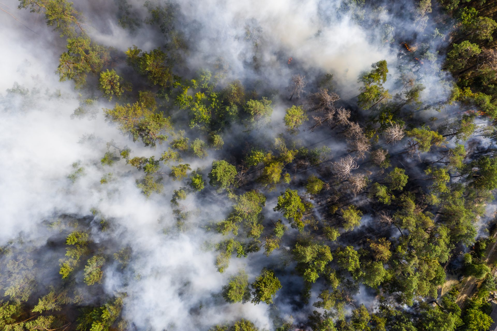 Aerial view of wildfire